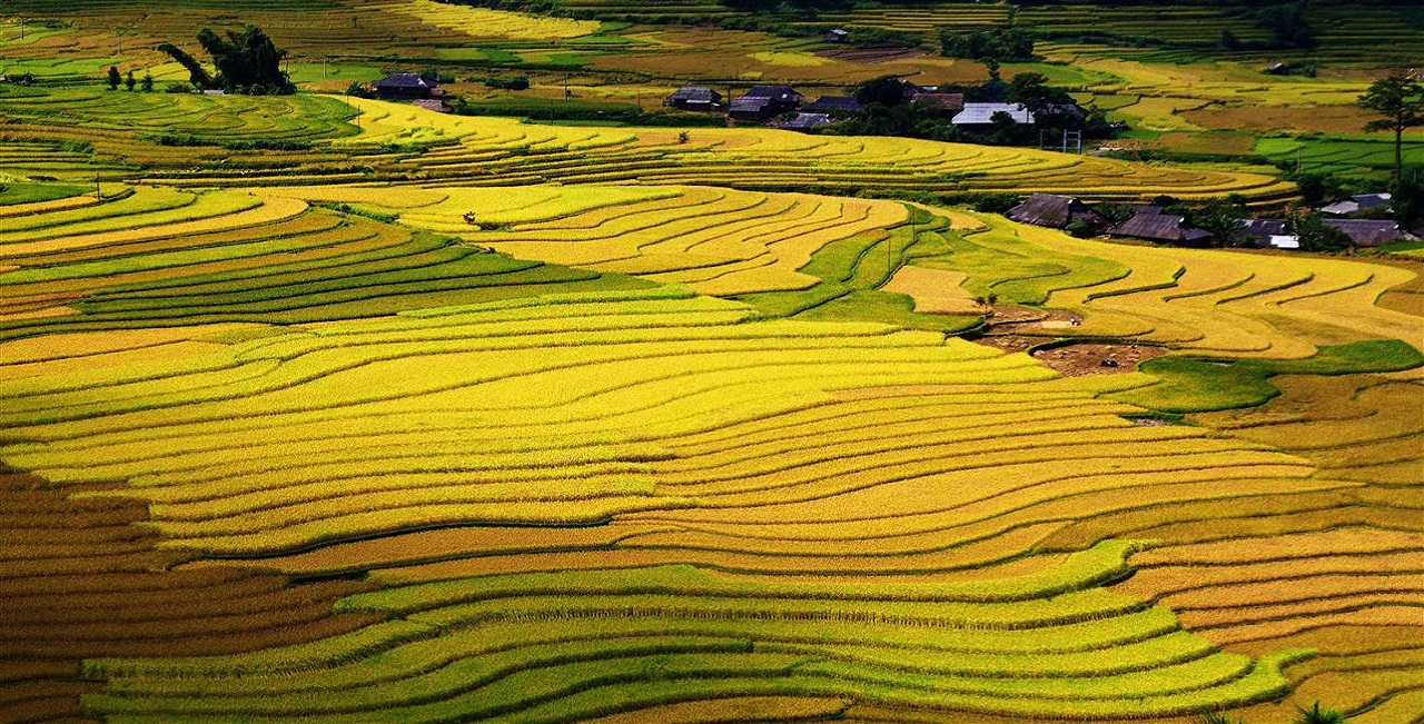 The rice terrace fields
